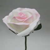 White/Pink Rose Velveteen Bloom Flower and Stem