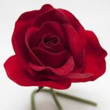 Red Rose Velveteen Bloom Flower and Stem