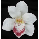 White Real Touch Cymbidium Orchid Flower Head