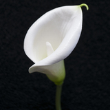 White Buttonhole Real Touch Calla Arum Lily