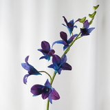 Purple Blue Dendrobium Orchid Spray