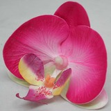 Real Touch Phalaenopsis Orchid Flower Head