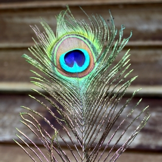 10pk 60cm Peacock Eye Tail Feathers