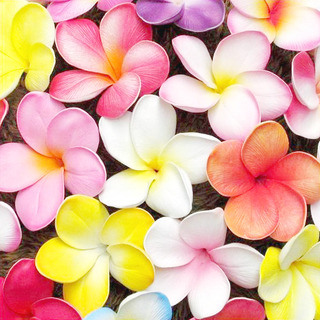 6pk Real Touch Frangipani Flower Heads